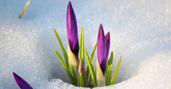 Поздравляем с праздником Весны! Обратите внимание на график работы